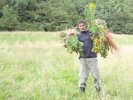 Peter clearing ragwort